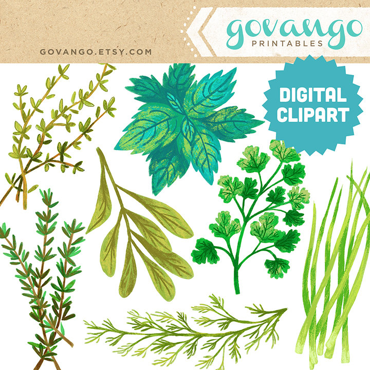 Parsley clipart basil Illustration Download Clipart file HERBS