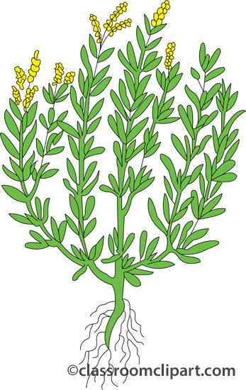 Herbs clipart sagebrush Herbs Classroom : Clipart tarragon_407