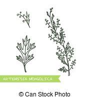 Herbs clipart sagebrush Illustration Sagebrush  Set Clip