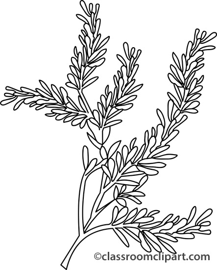 Herbs clipart sagebrush Herbs Classroom : Clipart southernwood_outline