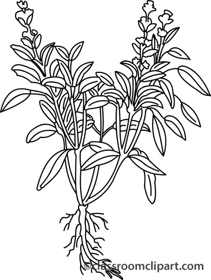 Herbs clipart sagebrush Outline Search From: Results Size: