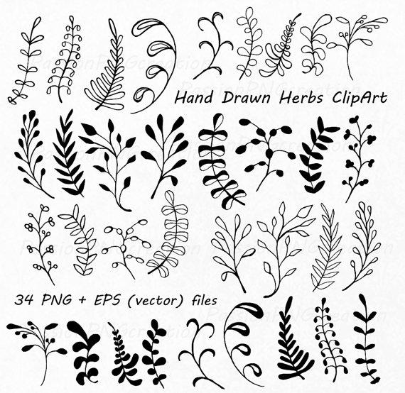 Drawn herbs Clipart art Herbs clip files