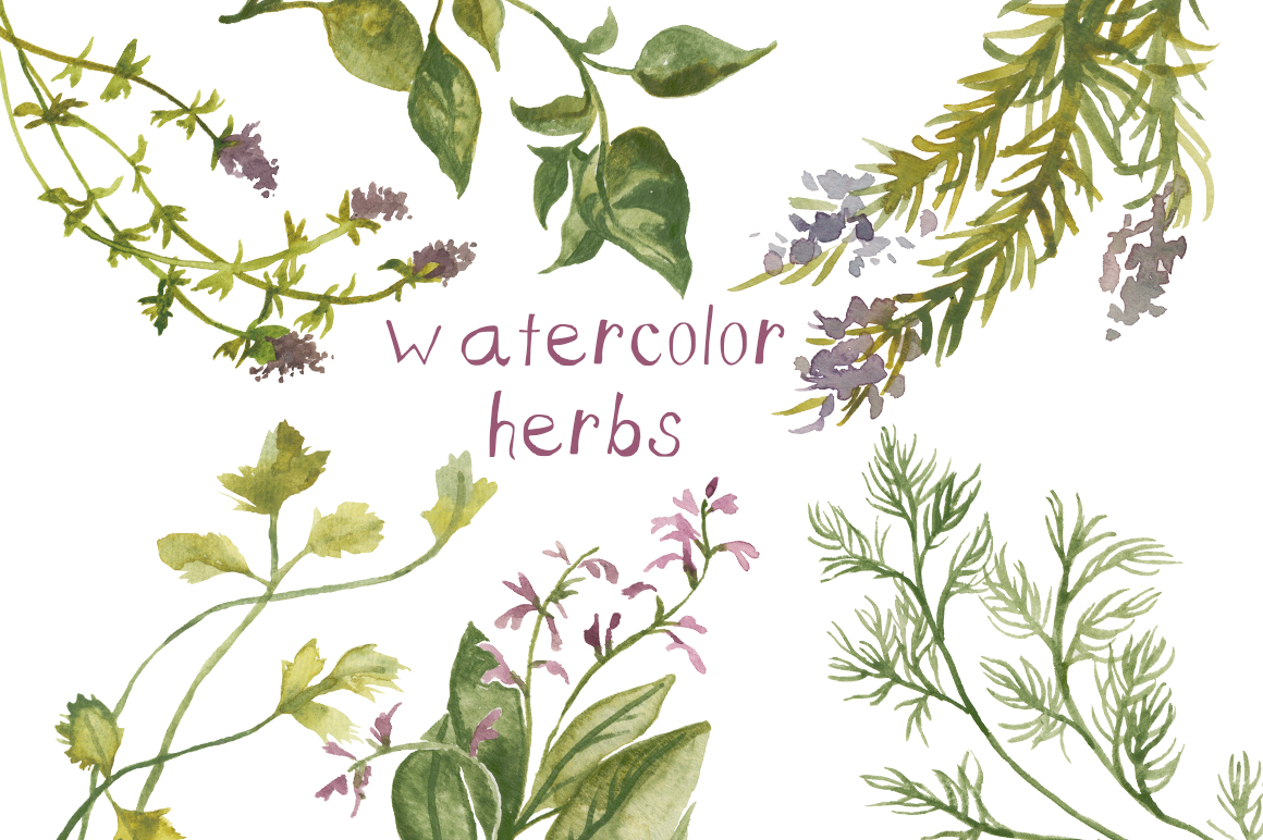 Basil clipart watercolor Creation Creation by Press Watercolor