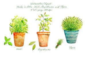 Herbs clipart watercolour On Herbs Pots Creative Market
