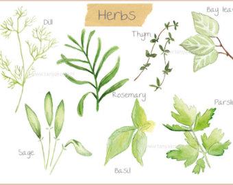 Herbs clipart watercolour PNG Herbs clipart files Digital