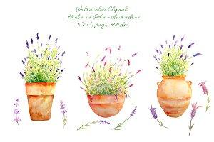 Herbs clipart watercolour On Clipart Herb Creative Market