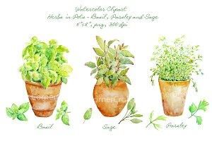 Herbs clipart watercolour On Clipart Watercolor Creative Market