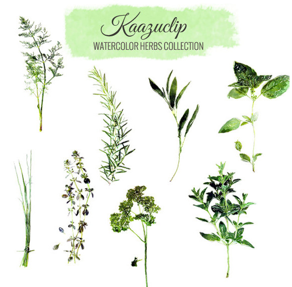 Herbs clipart watercolour Images Herbs by ~ Watercolor