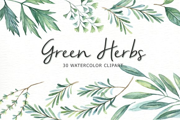 Herbs clipart watercolour ~ Herbs clipart Illustrations on