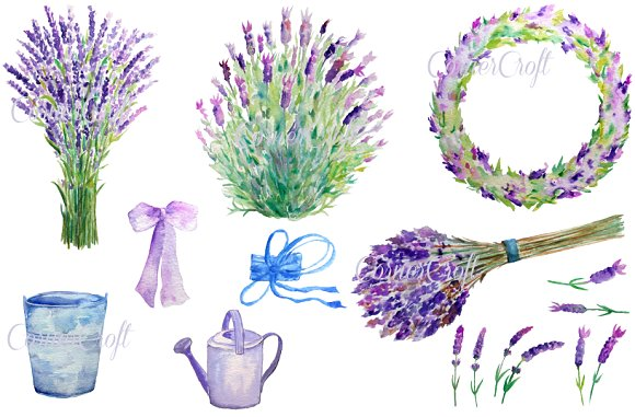 Herbs clipart watercolour ~ Lavender Art Illustrations on