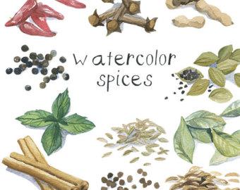 Herbs clipart watercolour Spice Art Spice Flower Plant