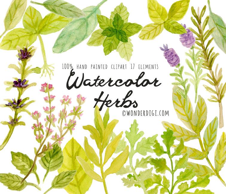 Herbs clipart watercolour Art is digital Watercolor herbs