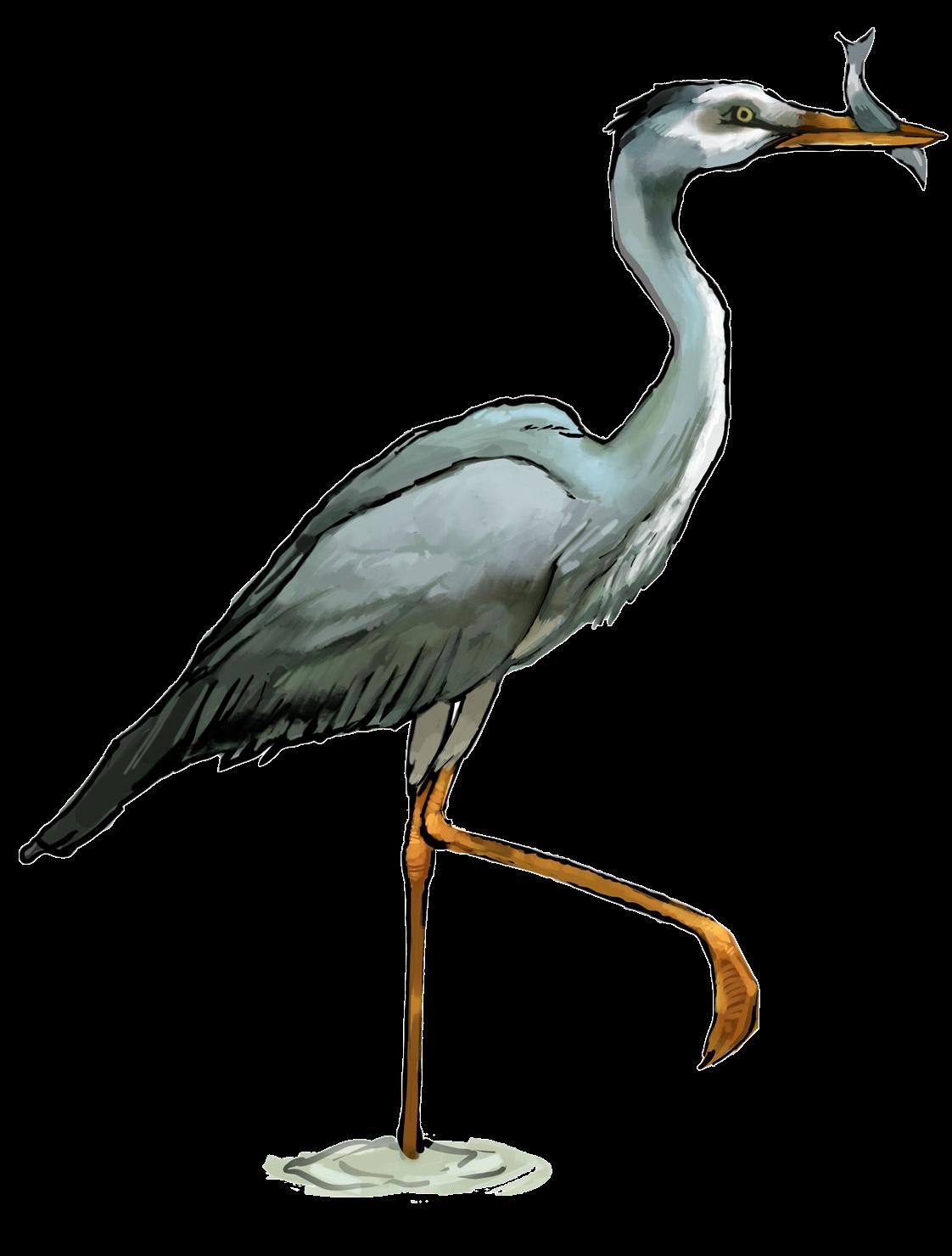 Heron clipart Clip Art Heron  Free