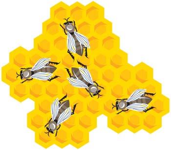 Hexagon clipart honey Honey clip com Bee Animals