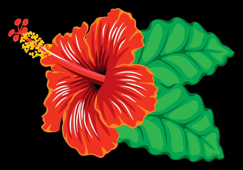 Hibiscus clipart (PNG) MEDIUM IMAGE Clipart Hibiscus