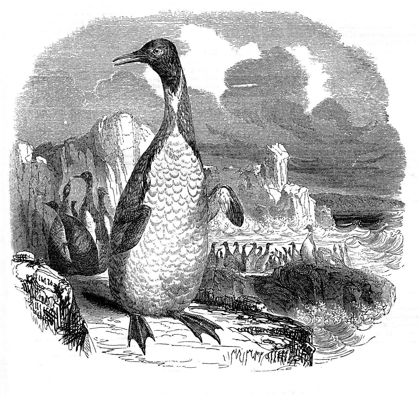 Penguin clipart vintage Graphic – Penguin Natural Art