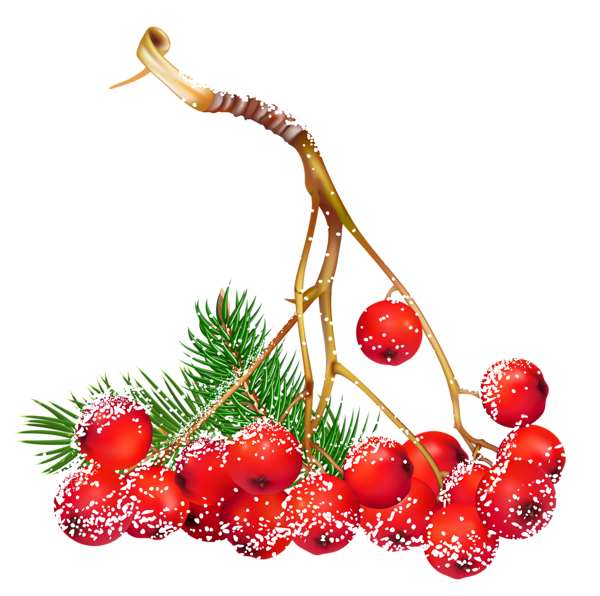 Holley clipart christmas things  Transparent Holly Snowy Christmas