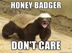 Honey Badger clipart fierce #5