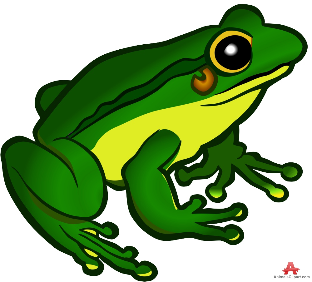 Animal clipart frog Hop Animals Colors of with