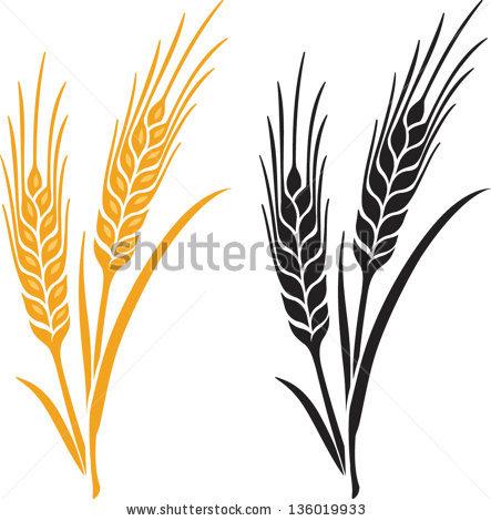 Drawn grain wheat stalk Vector and Ears Barley bread