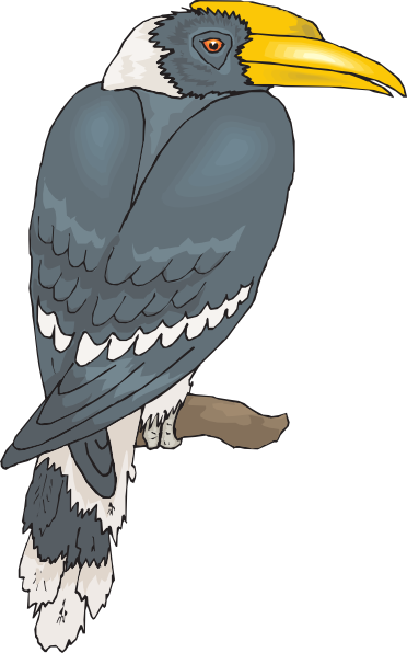 Hornbill clipart At as: com online Clker