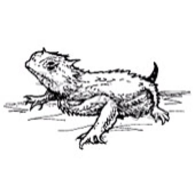 Horned Lizard clipart Horned Horny Lizard Pinterest 82