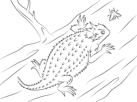 Horned Lizard clipart Coloring lizard pages Free