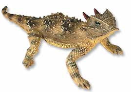 Horned Lizard clipart South the and due started
