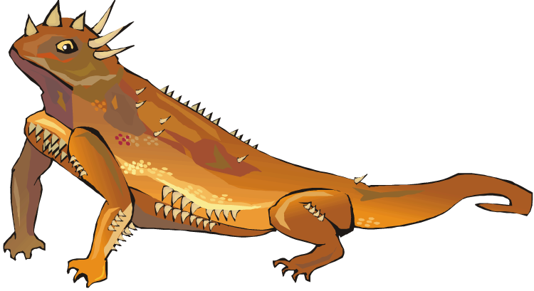 Horned Lizard clipart Picture Print ClipartMe Clipart Clipart