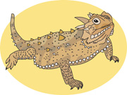 Horned Lizard clipart Art Lizard Pictures Illustrations Size: