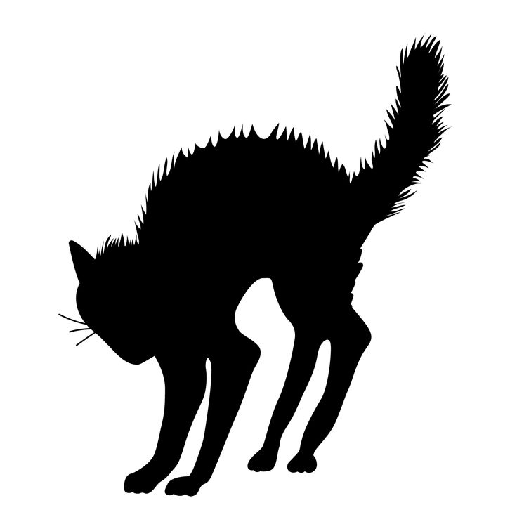 Black Cat clipart scared Scary Scary great ideas Halloween