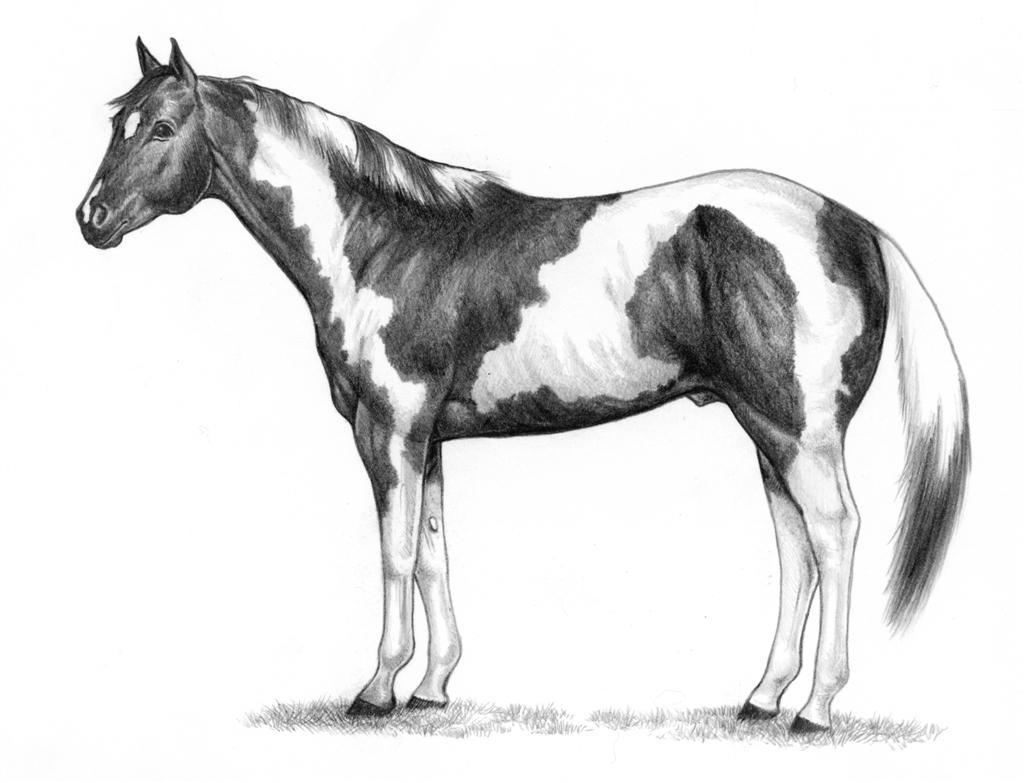 Horsemen clipart equestrian Mb) Clip APHA (1 Hirez