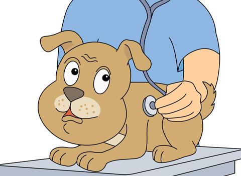 Pet clipart animal hospital Spring clipart Importance dog Hospital