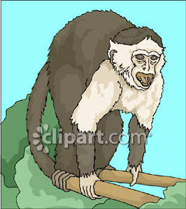 Howler Monkey clipart A Clipart Monkey Royalty In