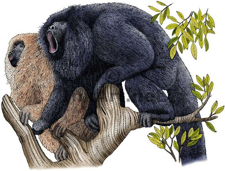 Howler Monkey clipart A a and illustration Pinterest
