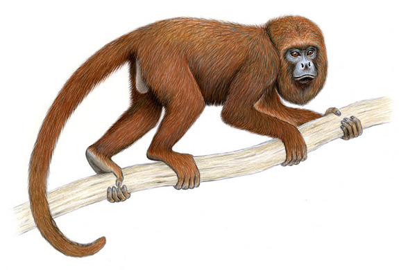 Howler Monkey clipart Howler drawing photo#23 Drawing monkey
