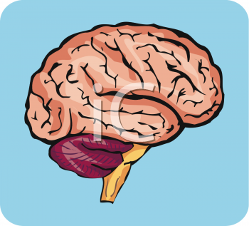 Realistic clipart human brain #2