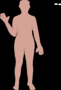 Human clipart body outline  Art Clker Clip Outline