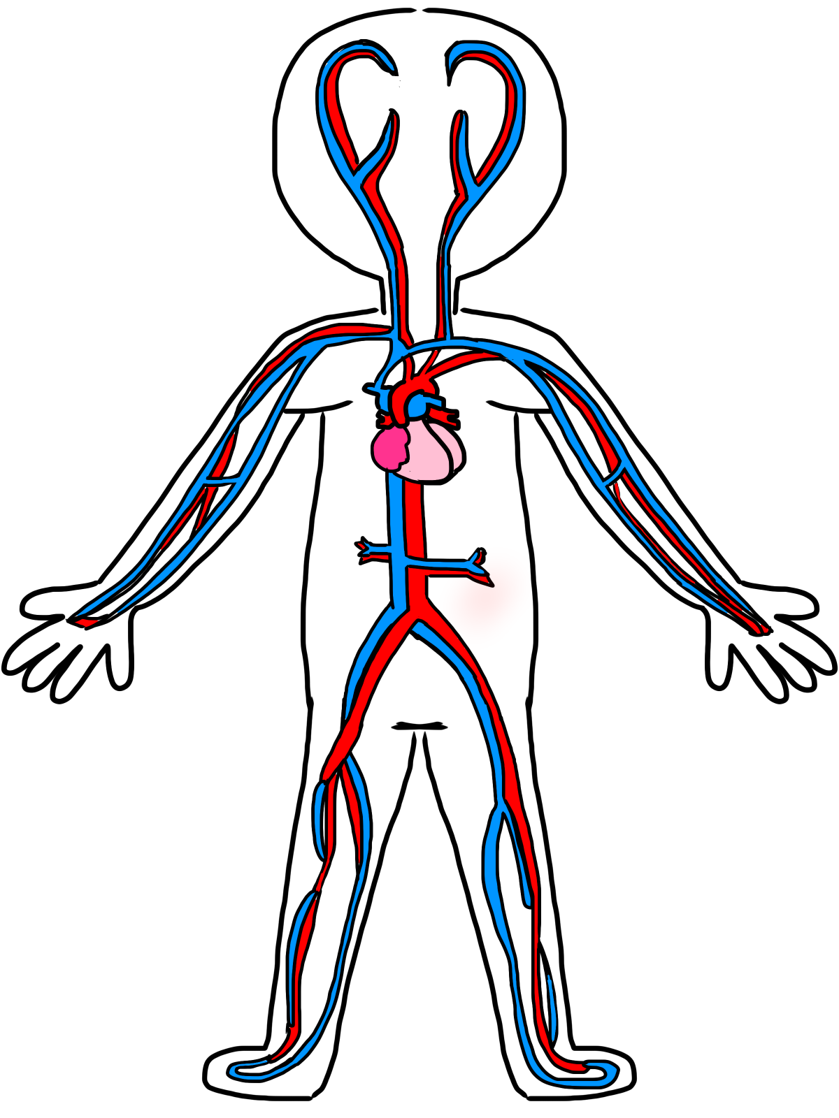 Human clipart cardiovascular system Kids 16 cliparts  drawing