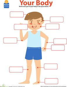 Organs clipart child body The human Parts a paper