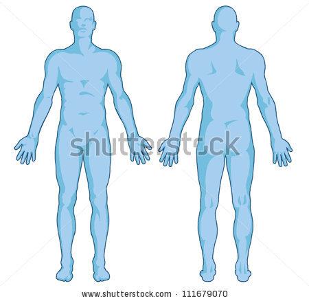 Organs clipart body shape Head Body Body Art Art