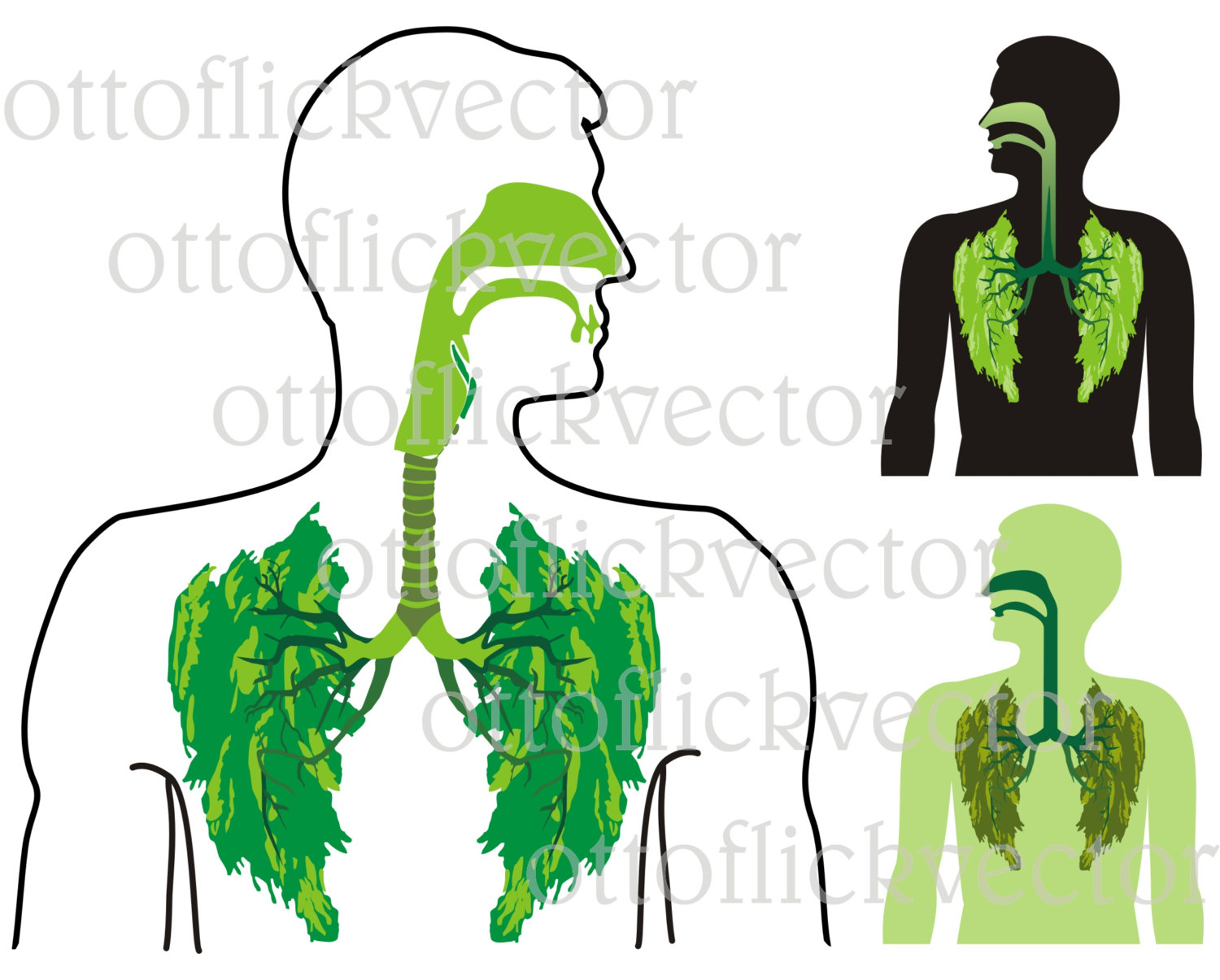 Organs clipart healthy lung Leaves Download Fall anatomy organ