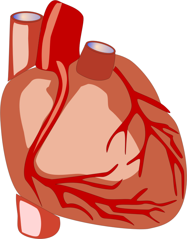 Science clipart heart #1