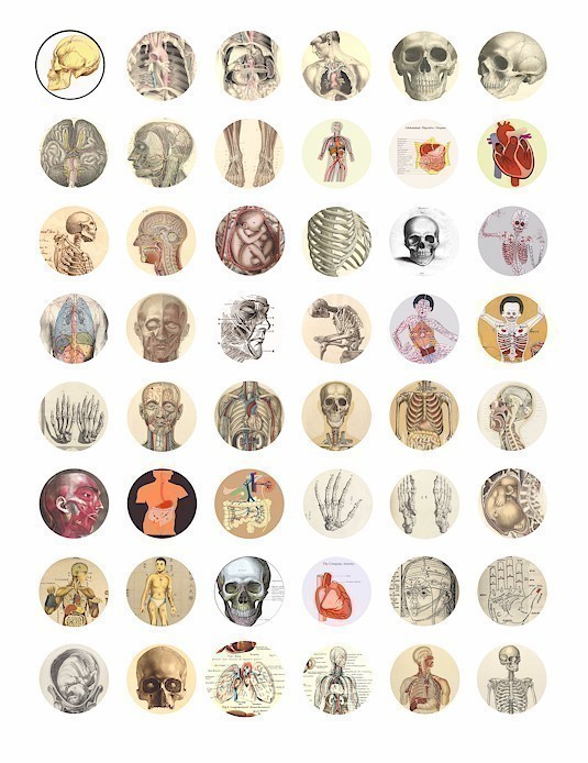 Anatomy clipart biological science #4