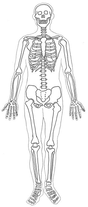 Bones clipart human body Sceleton Clipart Diagram human Human