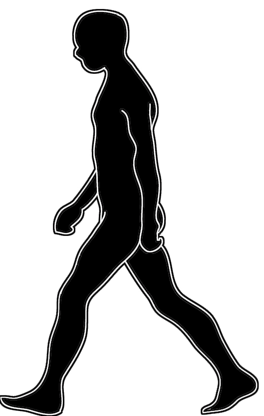 Nutria clipart Clipart Human photo#9 Walking Walking