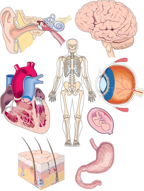 Organs clipart life science Human_anatomy  and Flood jpg