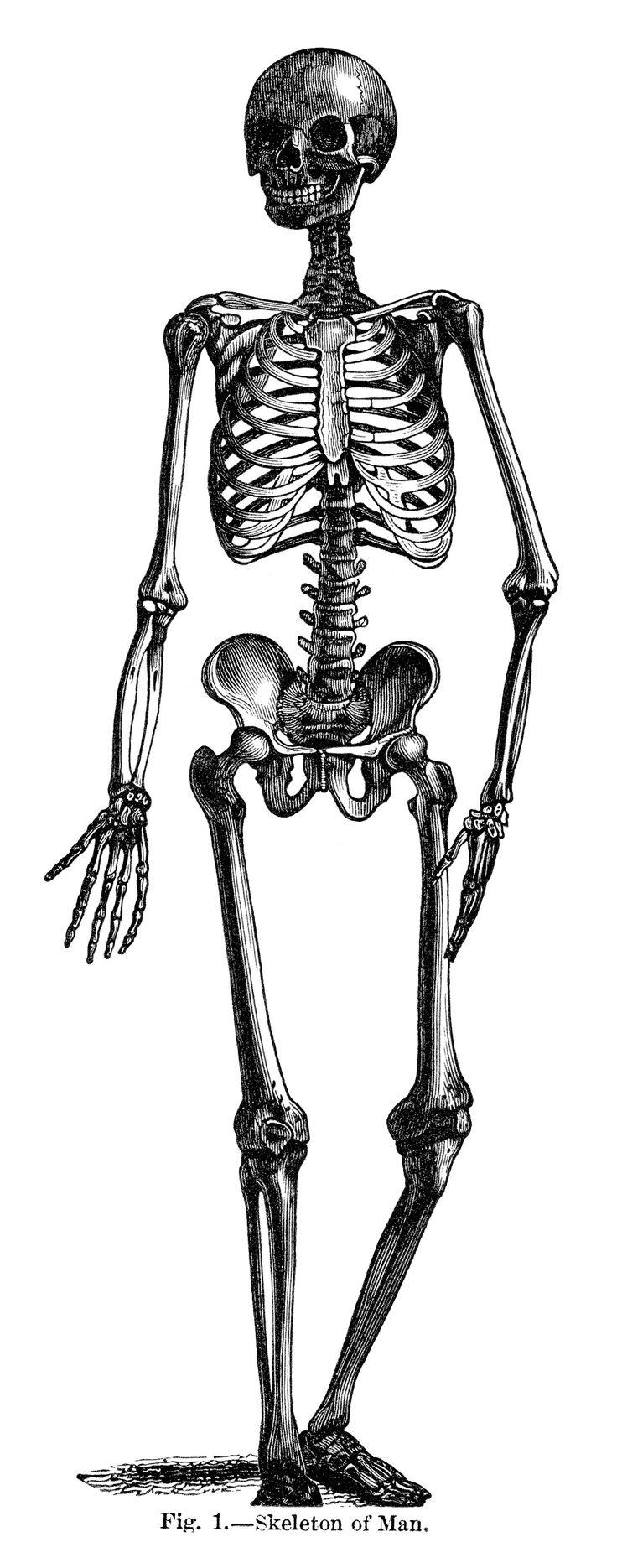 Sleleton clipart skinny Halloween Pinterest on art Art