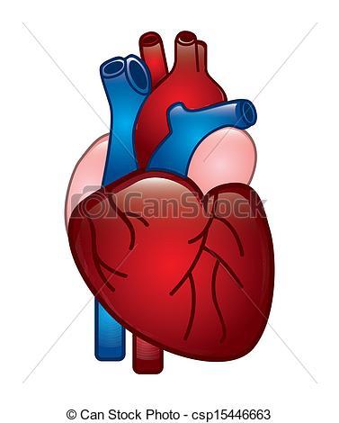 Illustration clipart heart Human heart icon royalty art