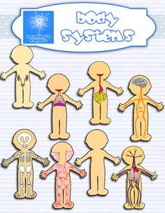 Organs clipart body system To Human clipart anatomy a